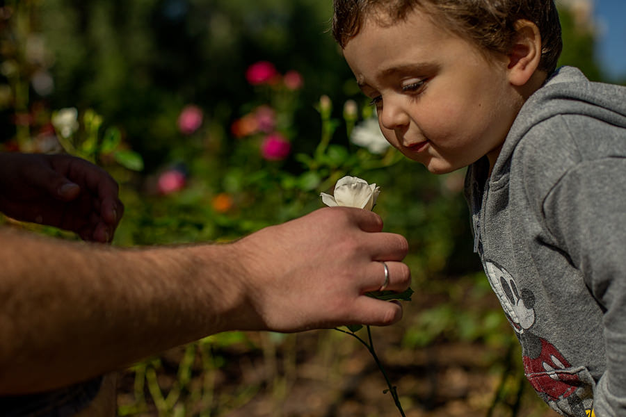 little boy is sniffing a flower